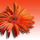 Orange on Orange by Bonnie T.  Barry