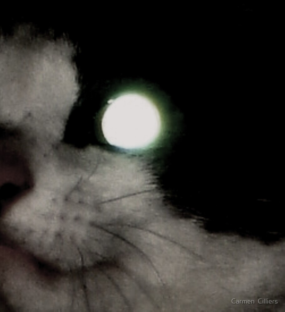 Sonic Cat by Carmen  Cilliers
