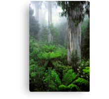 Errinundra 'Shining Gum' Forest Canvas Print