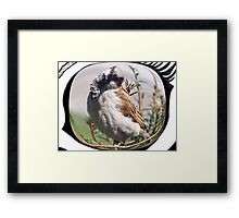 Cock-eyed Framed Print