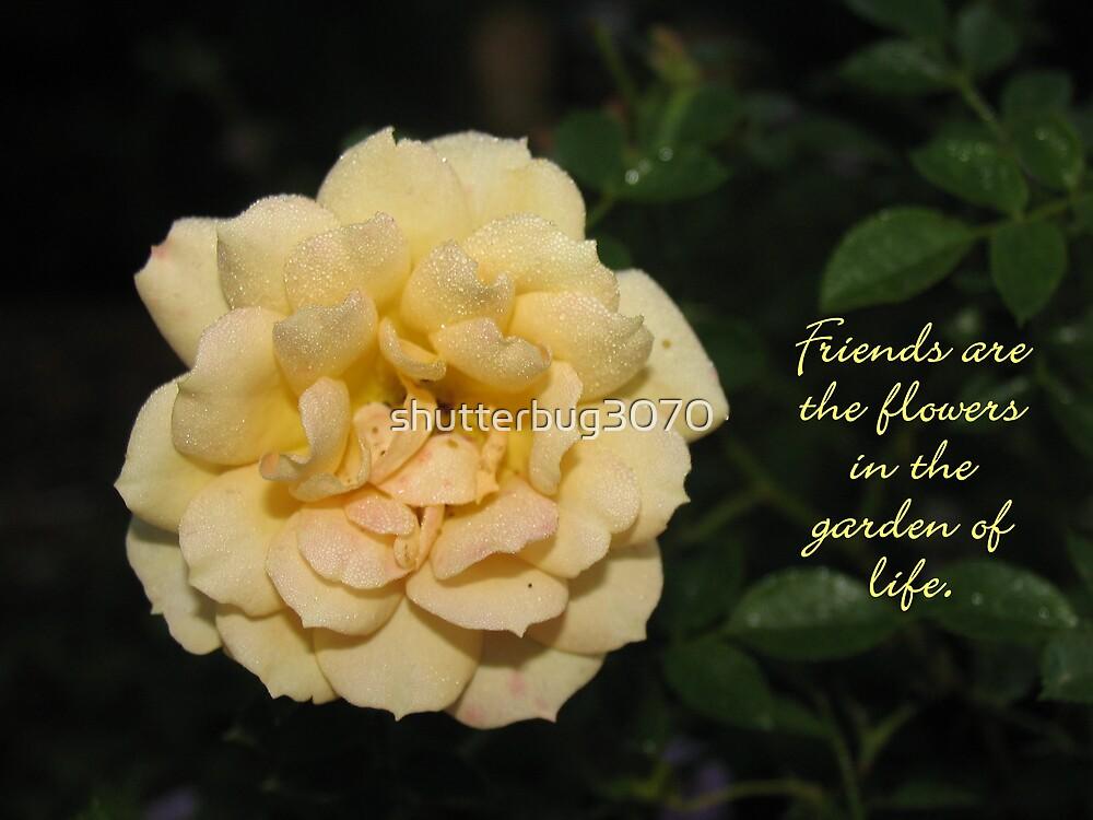 Friend...Yellow Rose 2 by shutterbug3070