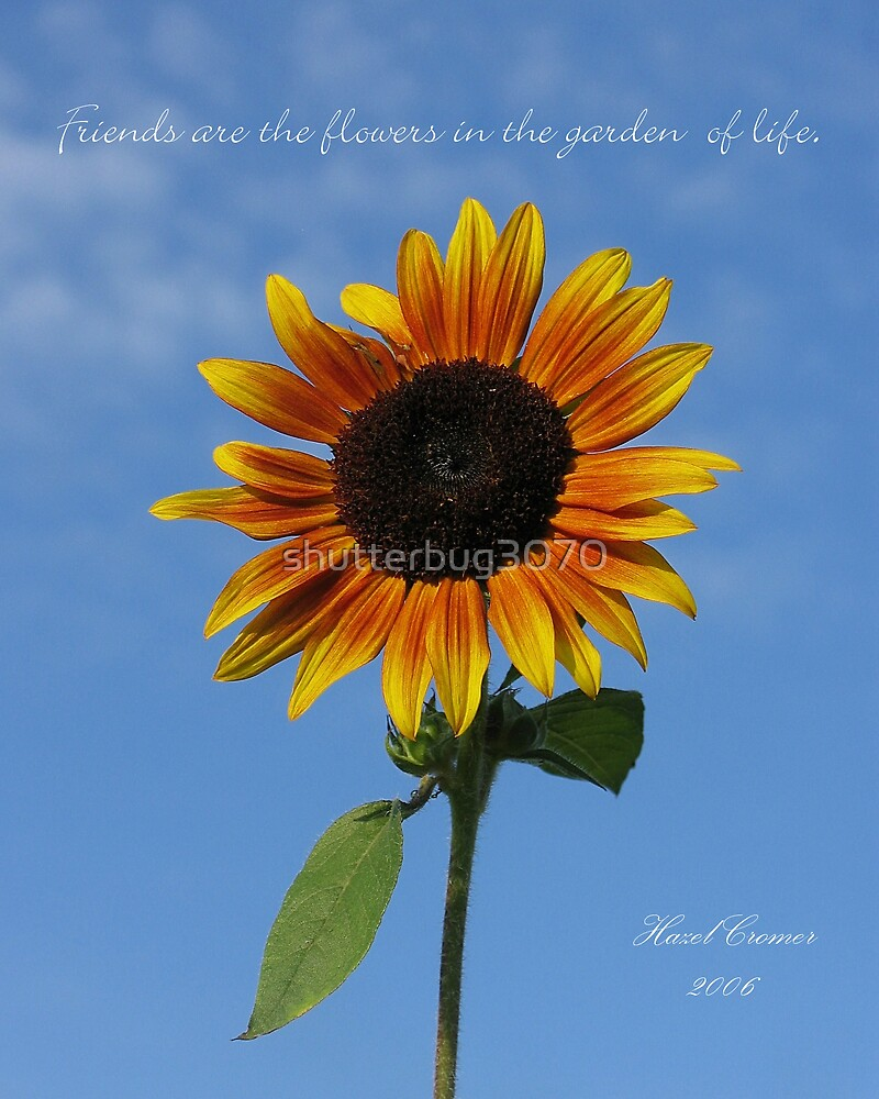 Friends...sunflower by shutterbug3070