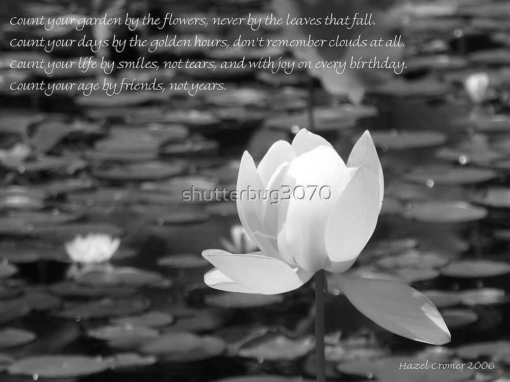 Friend....Lotus 2 by shutterbug3070