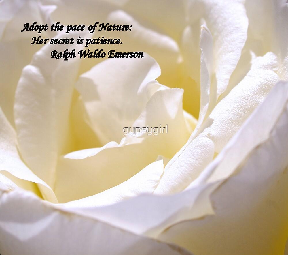 White Rose by gypsygirl