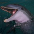 The Laughing Dolphin by Leah Perry