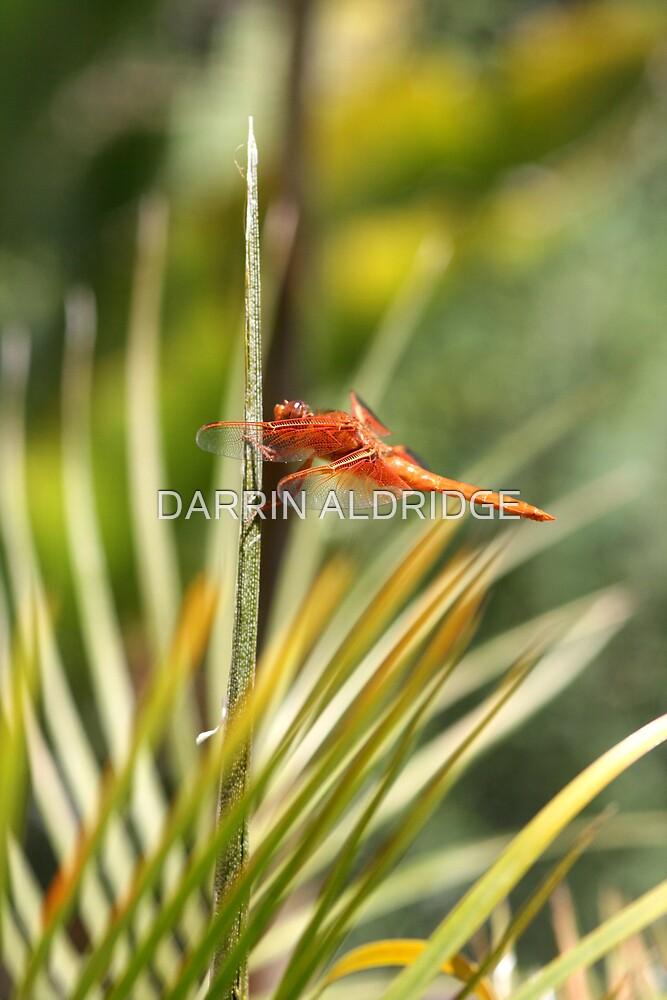 Palm Lover by DARRIN ALDRIDGE