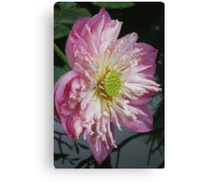 Queen Lotus Canvas Print