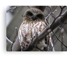 Owl After Kill pic 2 Canvas Print