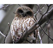 Owl After Kill pic 2 Photographic Print
