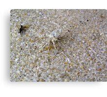 Tiny, tiny crab Canvas Print