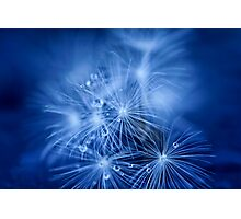 Tiny Fireworks Photographic Print