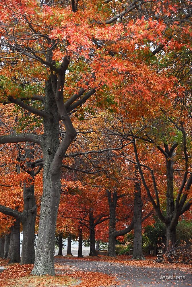 Oaks on Gnarr by JensLens