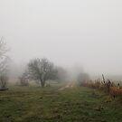 November Fog by AbigailJoy