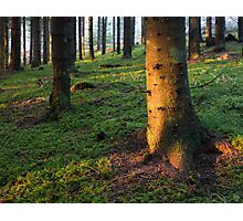 The Ancient Forest Photographic Print