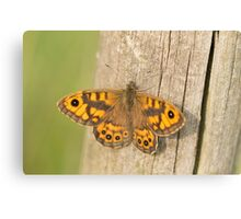 Wall Brown Butterfly Canvas Print