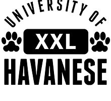 University Of Havanese by kwg2200