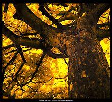Under the Tree HDR/IR by cienki7