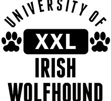 University Of Irish Wolfhound by kwg2200