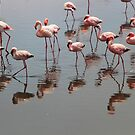 Flamingoes - Namebia by Gilberte