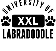 University Of Labradoodle by kwg2200