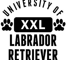 University Of Labrador Retriever by kwg2200