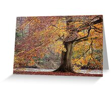 Every leaf speaks bliss to me... Greeting Card