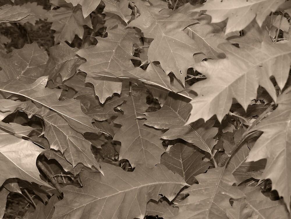Brown Leaf by Gene Cyr