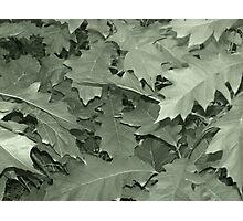 Green Leaf Photographic Print