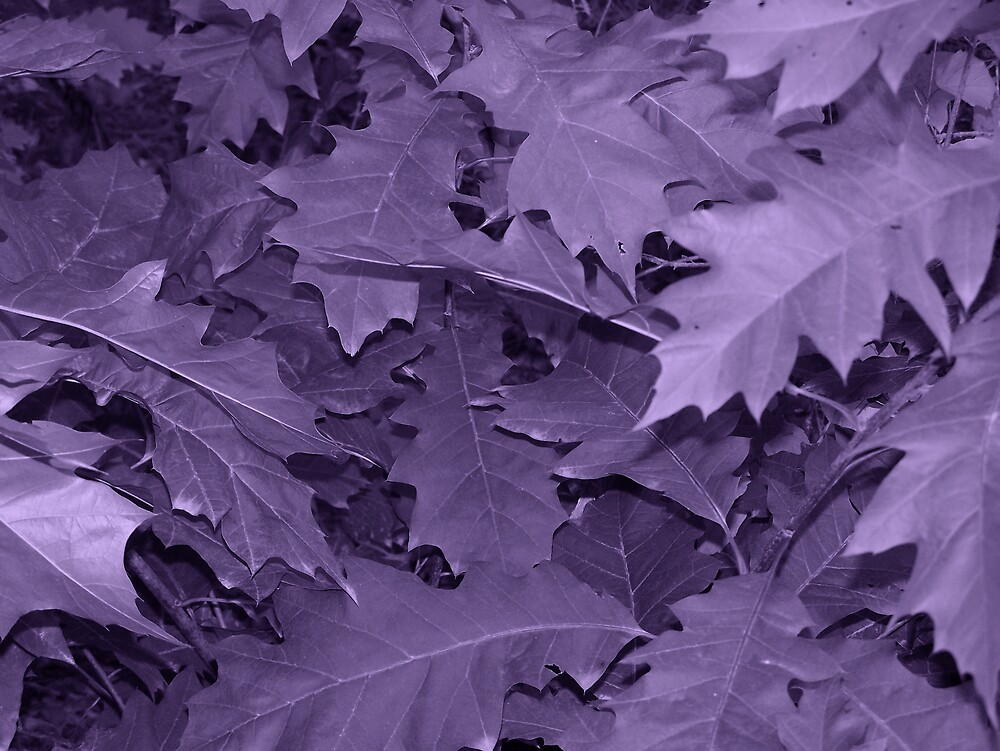 Purple Leaf by Gene Cyr