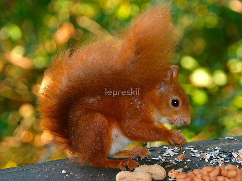 Red squirrel at lunchtime! by lepreskil