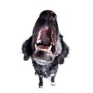 Black Dog Howling by idapix