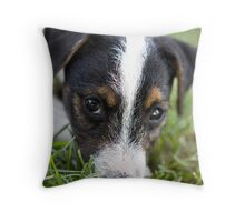 Jack Russel Terrier Puppy Throw Pillow
