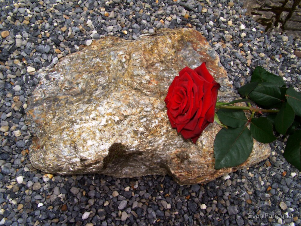 fallen rose 2 by Sean Farragher