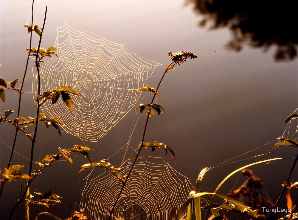 Dawn light  by TonyLegg