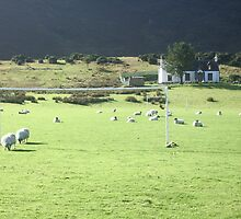 Footballing sheep! by fifi