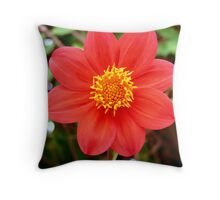 Dahilia flower Throw Pillow