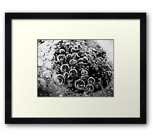 Bubbles 2 Framed Print