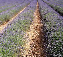 Purple beauty... by Wim Conix