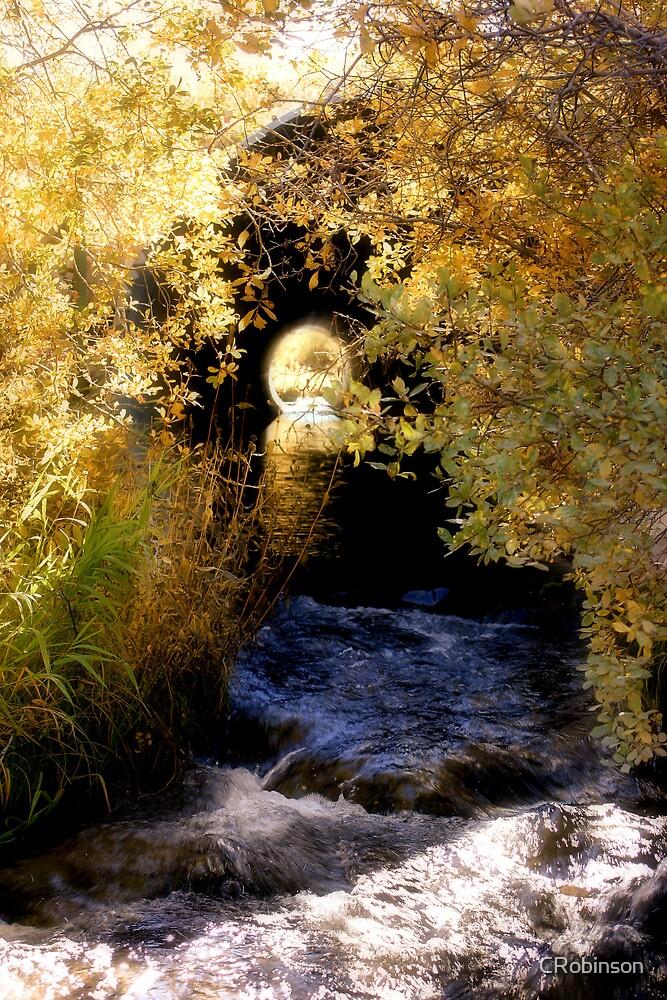Autumn Culvert by CRobinson
