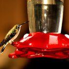 Hummingbird in Colour by CRobinson