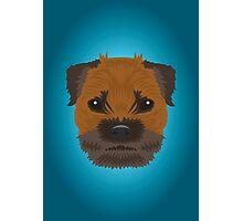 Border Terrier  Photographic Print