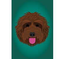 Brown Labradoodle Photographic Print