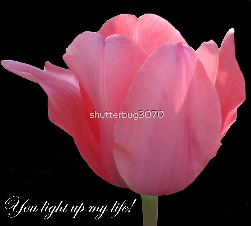 You Light Up My Life by shutterbug3070