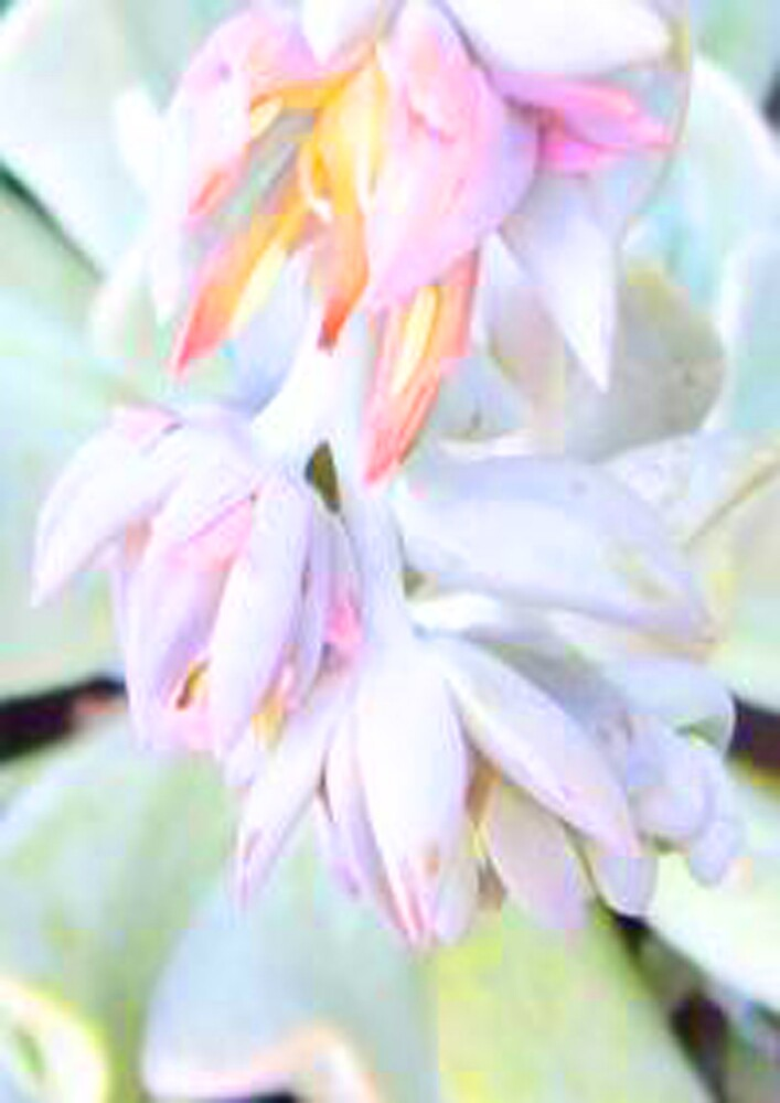 Succulent Blooms by Gozza