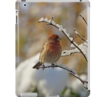 House Finch in Snow iPad Case/Skin