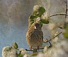 Cute Little Finch by Sandy Keeton