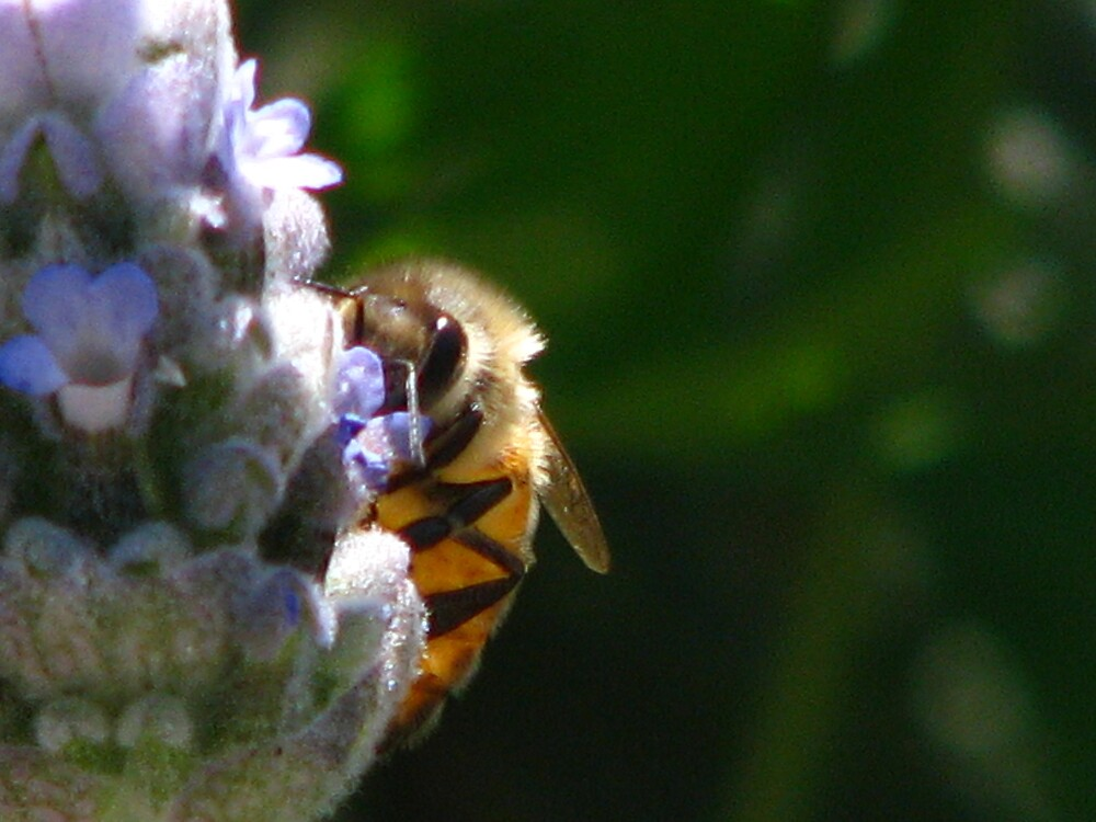 BEE ON SUNY DAY by Opat