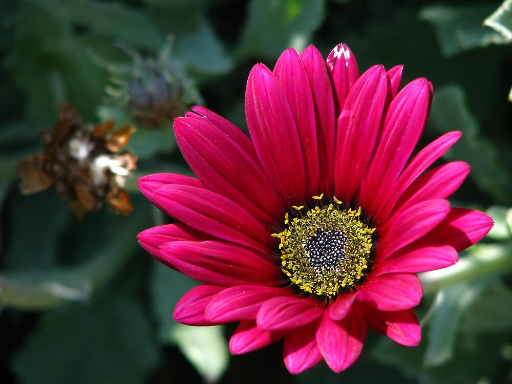 .......(^_^)........FLOWER by Opat