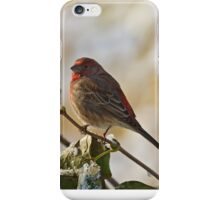 Finch Perching iPhone Case/Skin