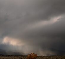 Wind Ghosts and the Fire Bush by Matt Dawdy
